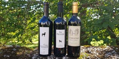 Des vins de caractère sans ambiguïté